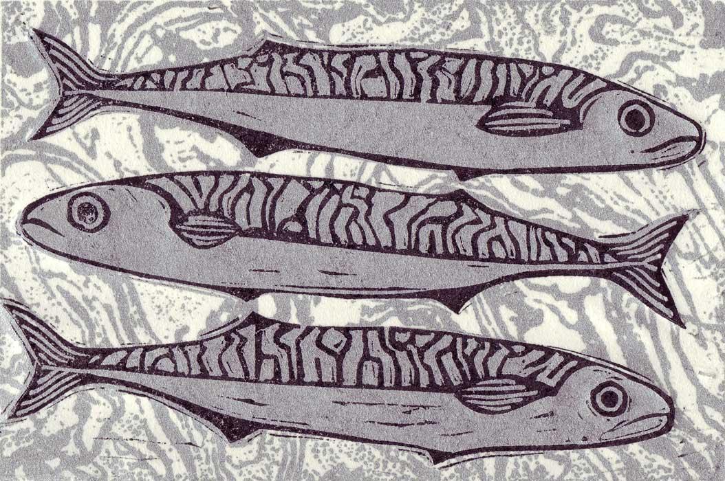 mackerel iv