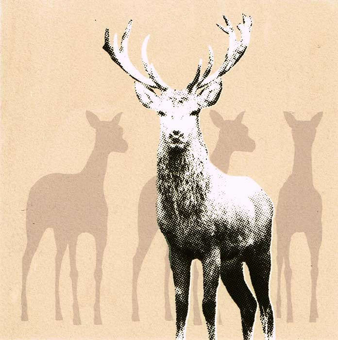 stag II