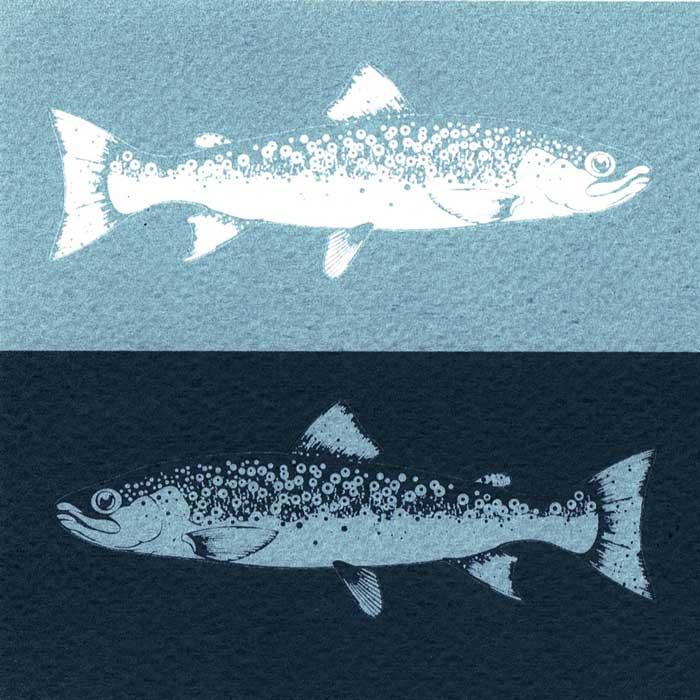 0457-trout